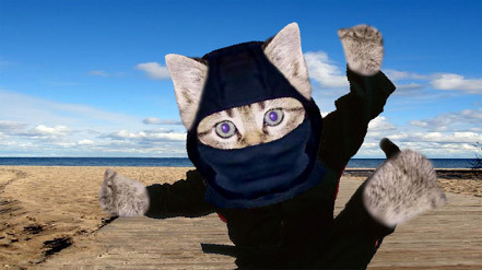 Ninja Katze