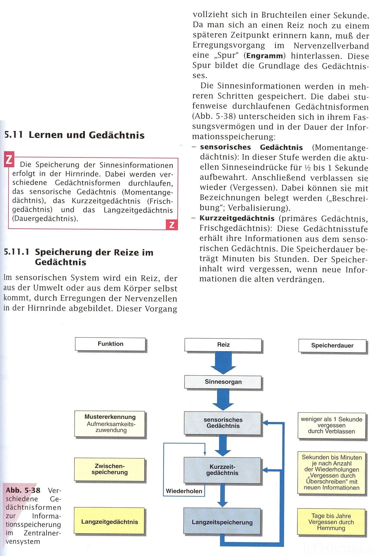 Ausgezeichnet Anatomie Der Hirnrinde Ideen - Menschliche Anatomie ...