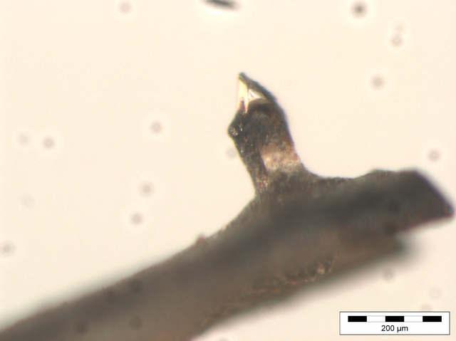 Mikroskop-Ansichten einer Shure Ultra 500 Nadel