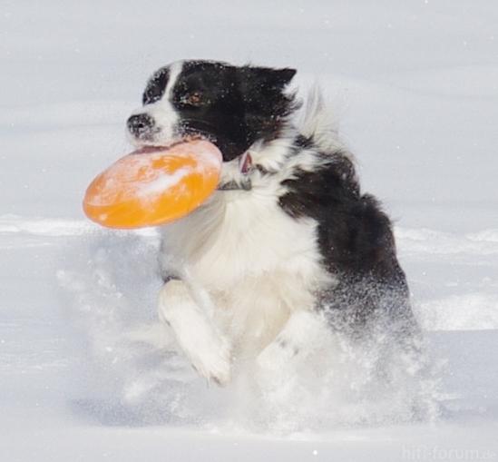 Lady Donka Vom Wolfsnest-Schnee02