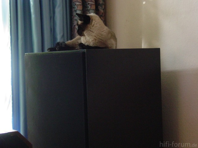 Cat On Klipsch SW15 Series2 Powered THX Subwoofer