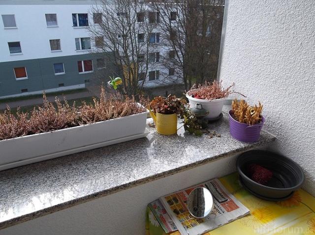 Balkonsims