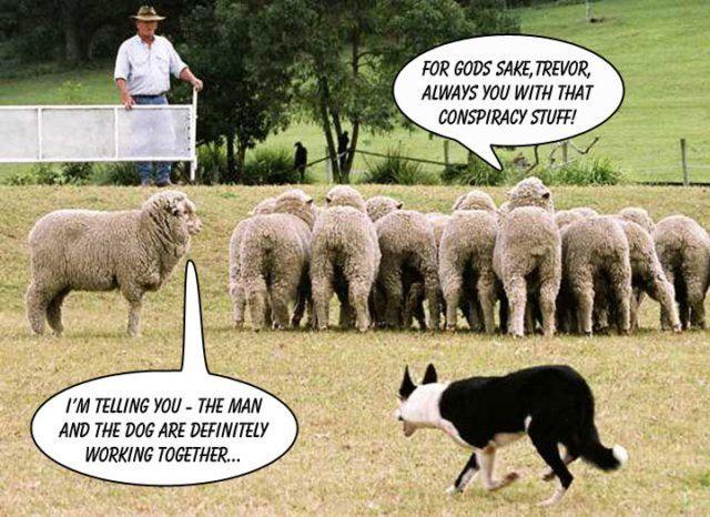 Schäfer Und Schäferhund Nur Verschwörungstheorie
