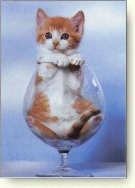 Katze~in~Glas