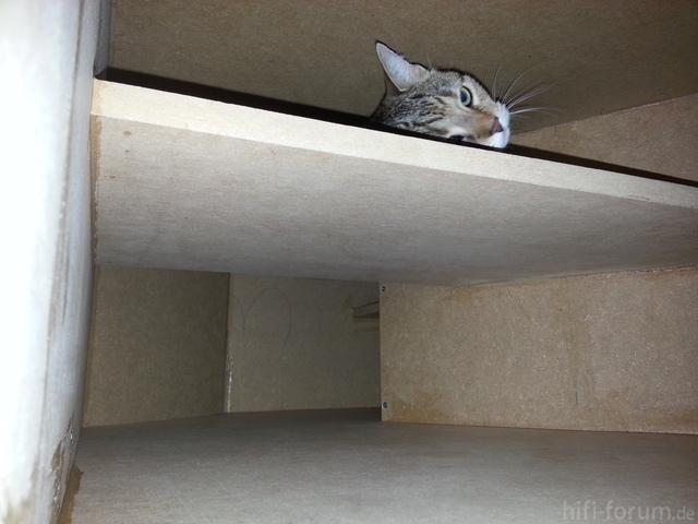 lowcost hornsubwoofer hornsub40 projekte der nutzer eigenentwicklungen hifi forum seite 19. Black Bedroom Furniture Sets. Home Design Ideas