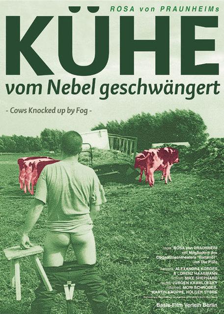 kuehe_von_nebel_geschwaengert