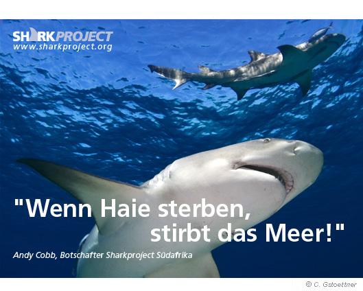 SharkProject Wenn Haie Sterben Stirbt Das Meer Banner