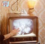 Cats TV