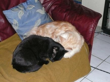 Meine Katzen 046