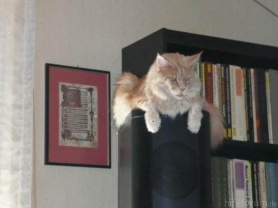 Meine Katzen 051