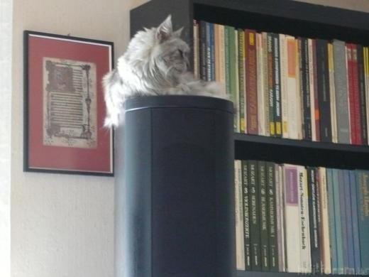 Meine Katzen 055