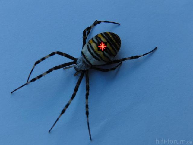 Marantz-Spider