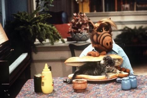 Alf + Katze