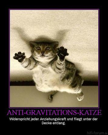 Antigrav-Katze