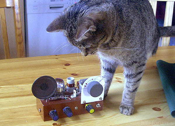 Audion Katze
