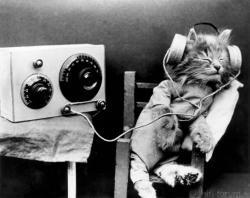 Cat-music