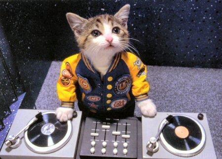 Cat's DJ