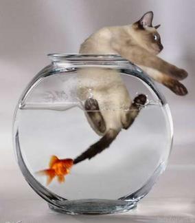 Fischfrißtkatze