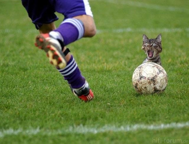 Fussballkatze