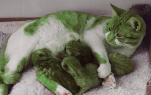 Green-mom