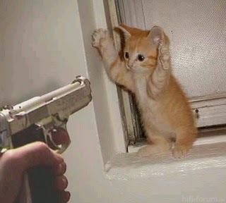 Handsupcat
