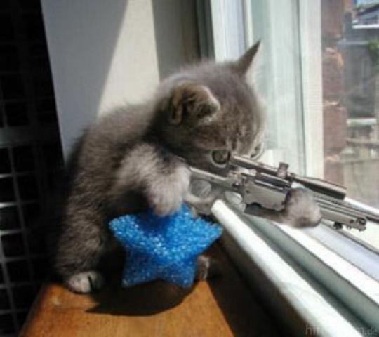 Katze An Gewehr