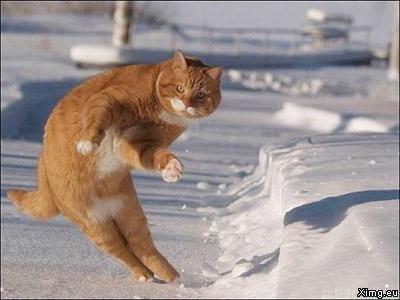 Katze Boßelt