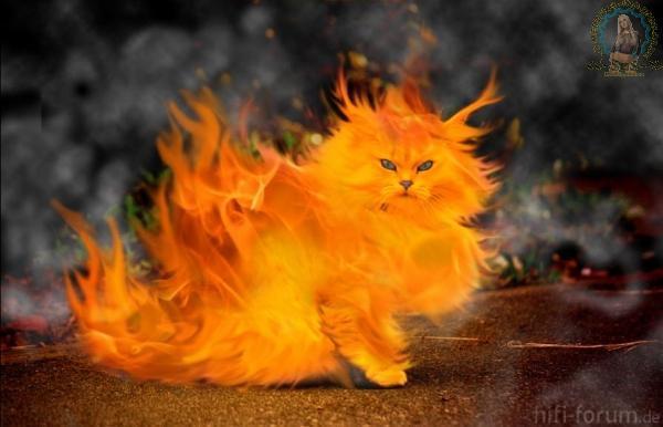 Katze Brennt