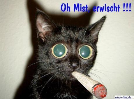 Katze Raucht