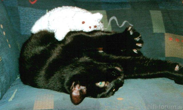 Katze Ringt