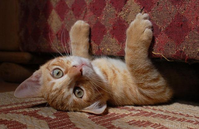 Katze Unter Sofa