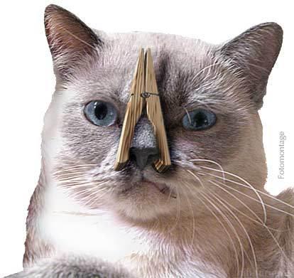 Katzemitklammer