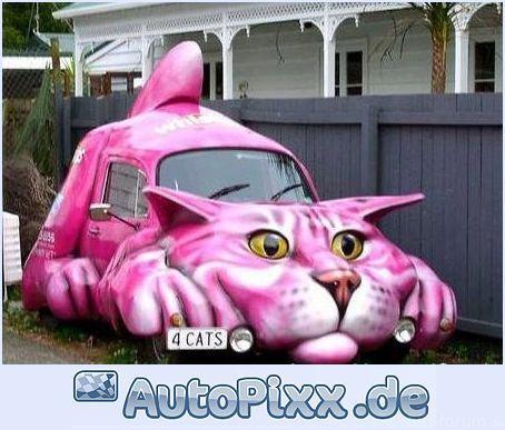 Katzen Auto