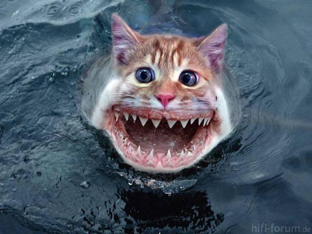 Katzenhai