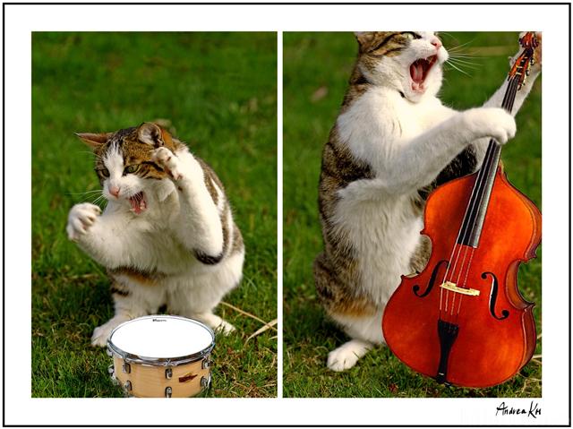 Katzenmusik²