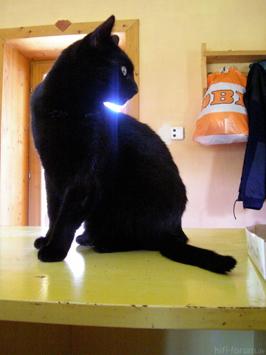 Tscherenkow-Katze