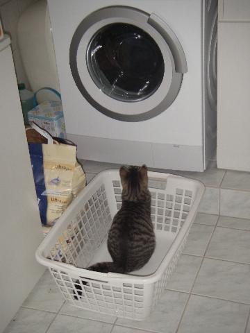 Waschmaschinen-Fernseher