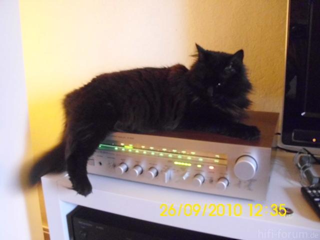 Katze Auf Yammie