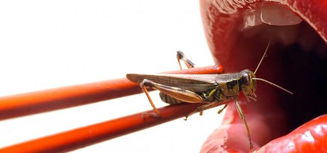 Rentokil Insekten Essen Insektaurant Pestaurant 011 770x360