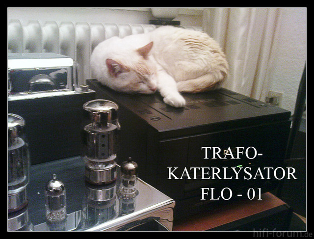 Katerlysator Floh-01 Im Betrieb.