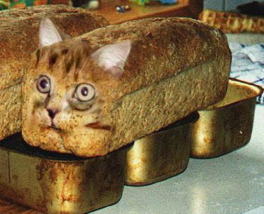 Katze Brot