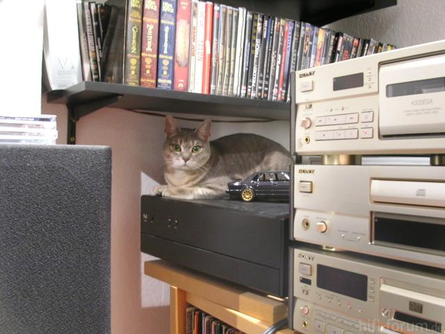High Tech Cat