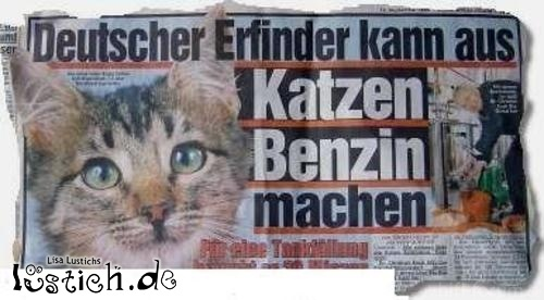 13100 Katzenbenzin