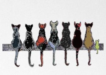 7katzen