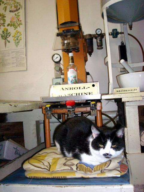 Anrollmaschine Katze2