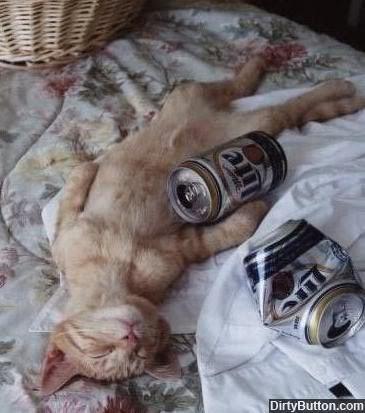 Bierkatze-katerstimmung