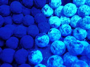 Blaue_rumkugeln