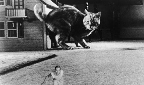 Grant Williams Mit Katze