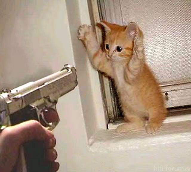 Handsupcat 1a
