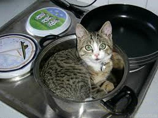 Katze In Topf